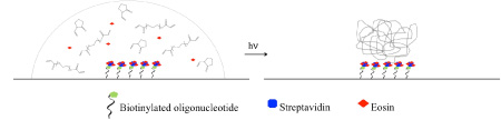 polymerization-based signal