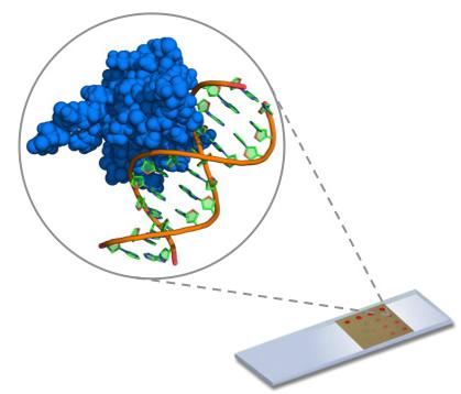 evaluating the sensitivity epigenotyping