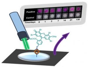 Polymerization based amplification for paper immunoassays copy
